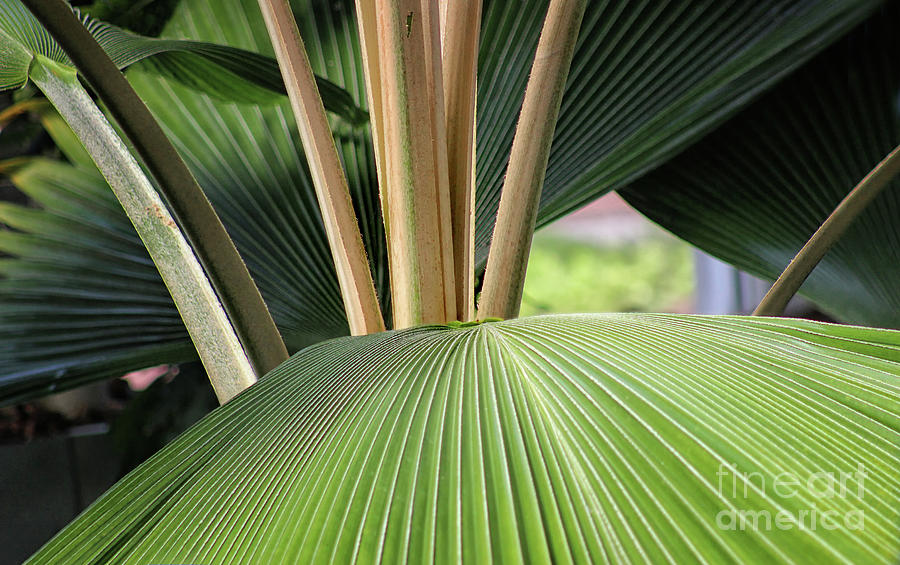 Palm Pleats by Karen Adams