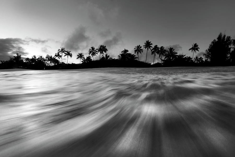 Black And White  - Palm Rush - Bw by Sean Davey