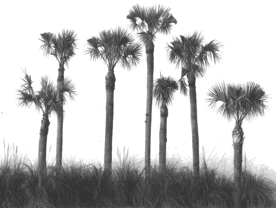 Palm Stand by Michael L Kimble