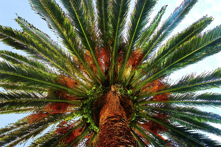 Palm by Timothy Bulone