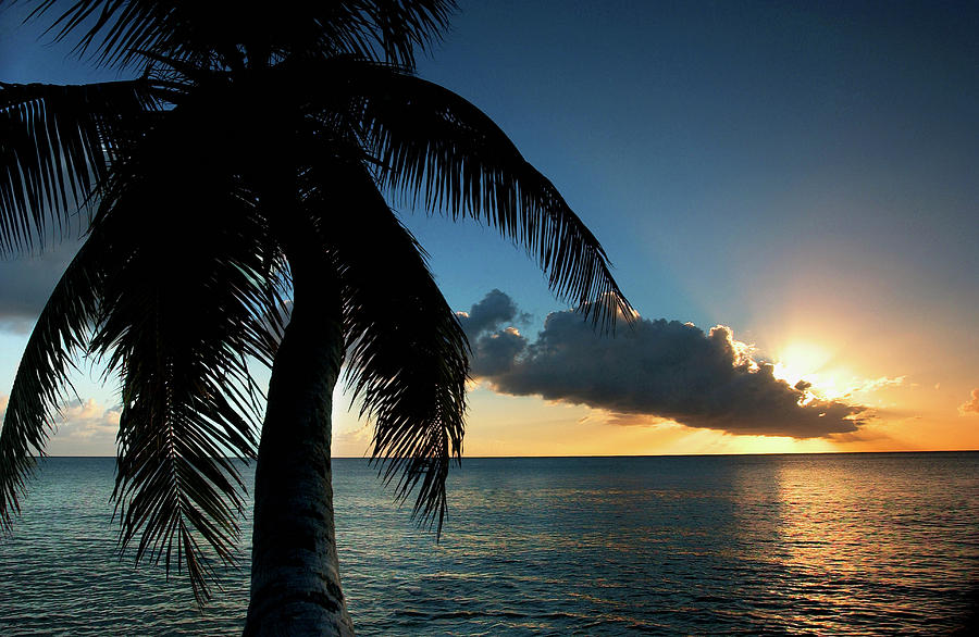 Palm Tree And Ocean At Sunset Photograph by Medioimages/photodisc