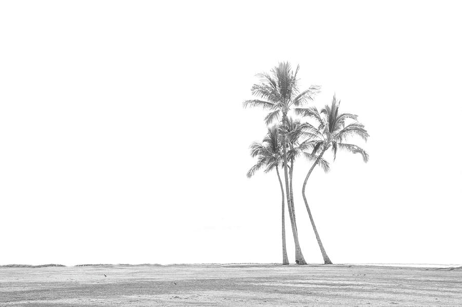 Palm Tree Cluster in Black and White by Ramona Murdock