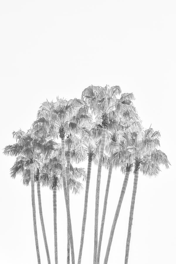 Palm Tree Grove in Black and White by Ramona Murdock