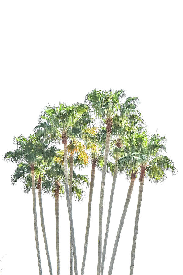 Palm Tree Grove by Ramona Murdock