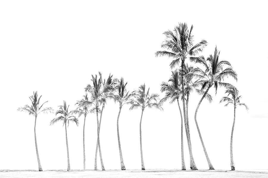 Palm Tree Horizon in Black and White by Ramona Murdock