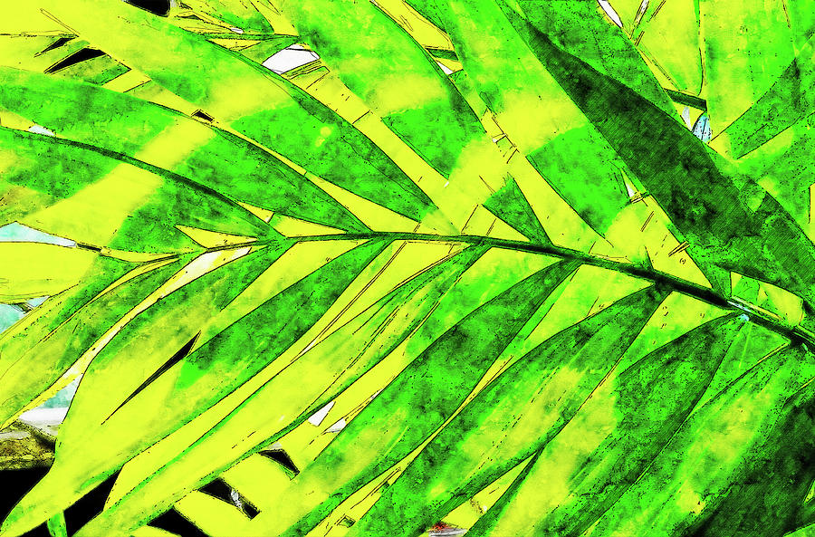 Palm Tree Leaves Watercolor Drawing Drawing By Hasan Ahmed