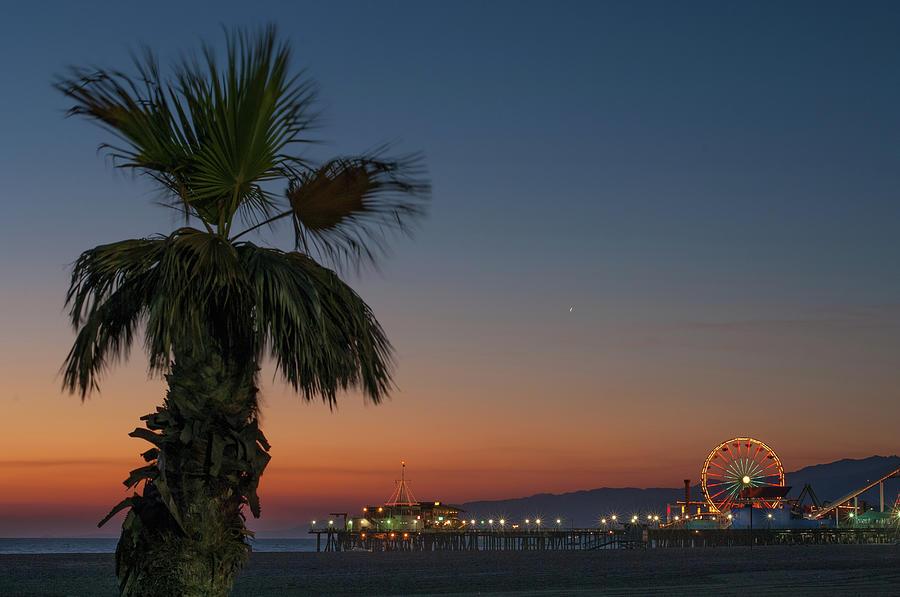 Palm Tree On Beach At Sunset Photograph by Cultura Rf/antonio Saba