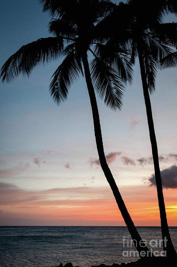 Palm Tree Silhouettes At Sunset Photograph
