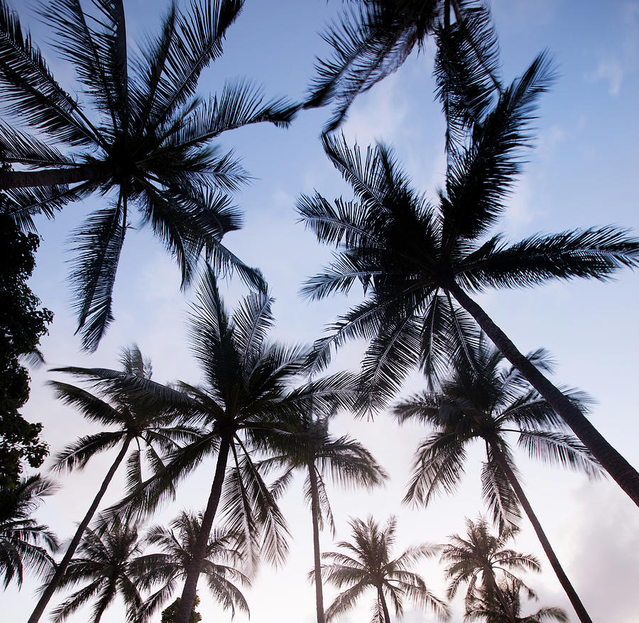 Palm Tree Silhouettes Photograph by Nadyaphoto