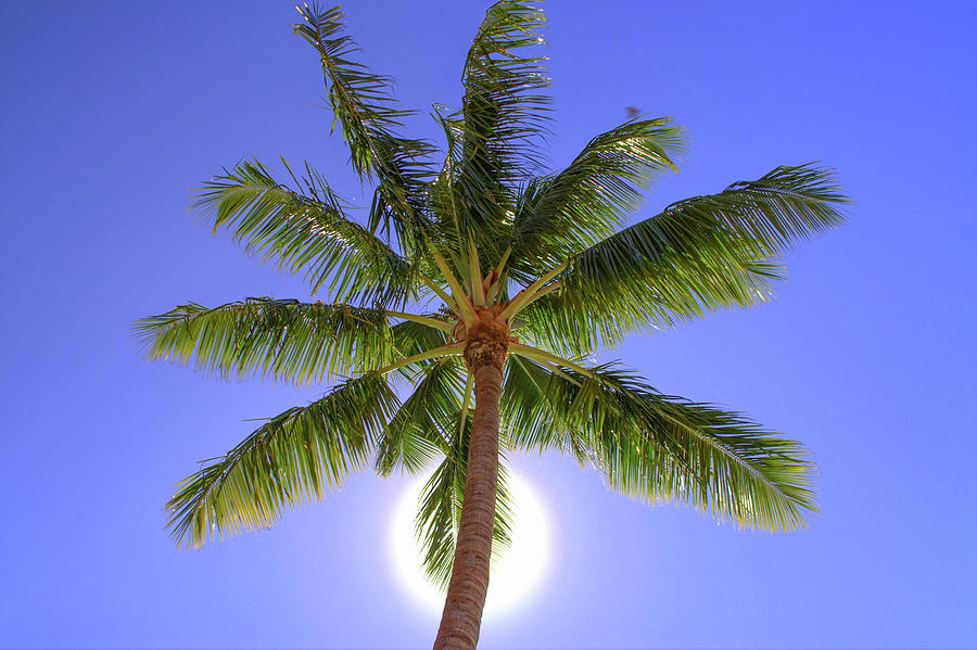 Palm Tree Sun by Patti Deters