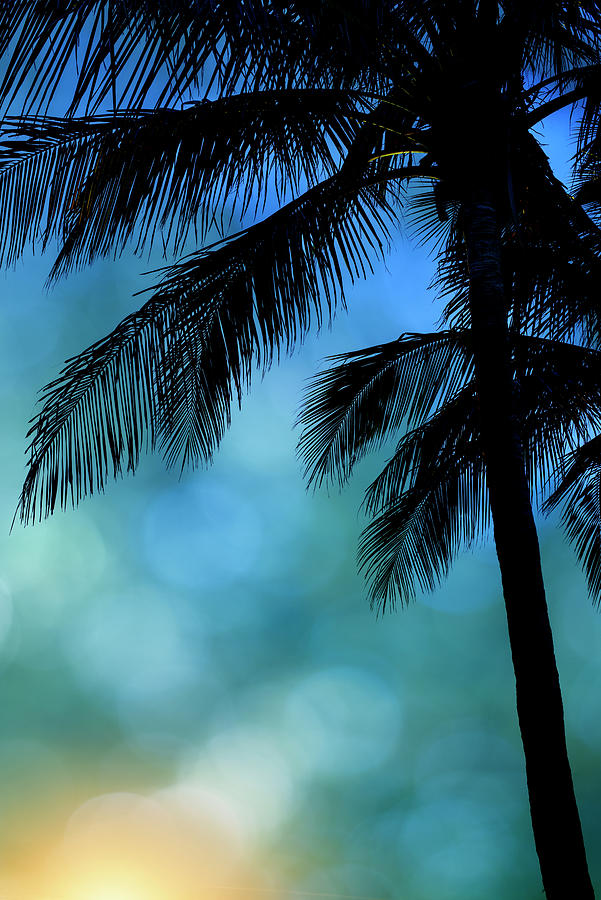 Palm Trees Photograph - Palm Blues Sunrise by Laura Fasulo