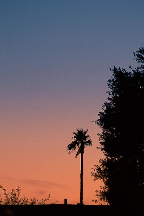 Palm tree sunset by Darrell Foster