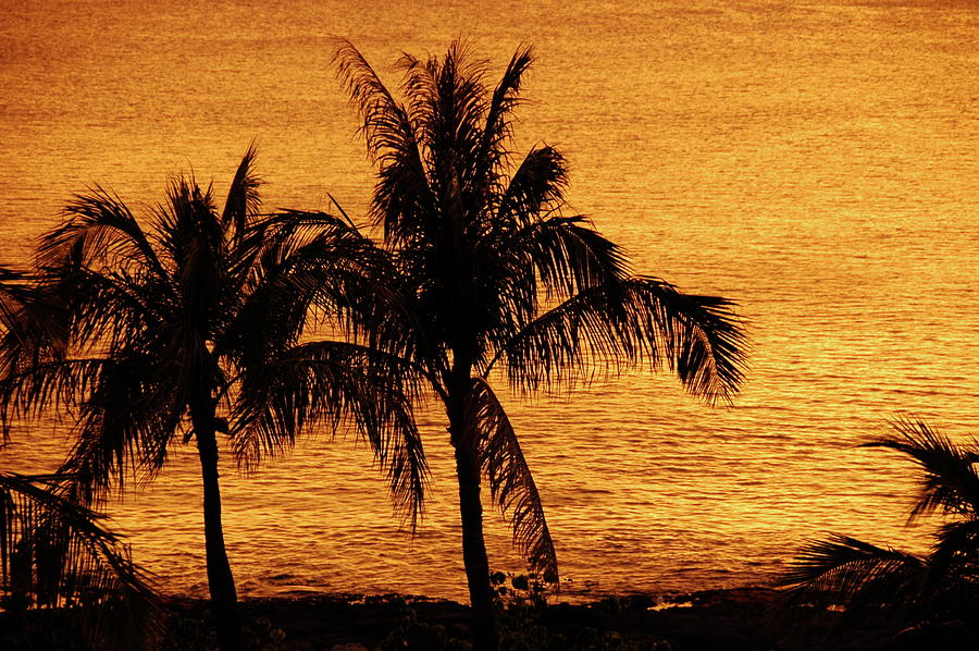 Hawaii Photograph - Palm Tree Sunset by Marty Klar