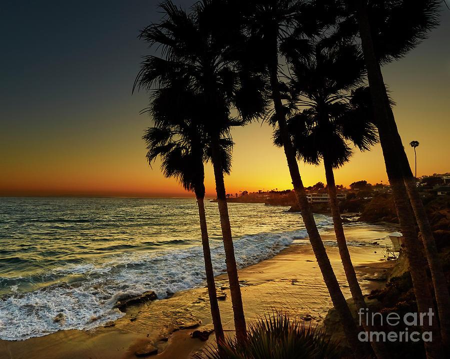 Palm Tree Sunset by Steve Ondrus