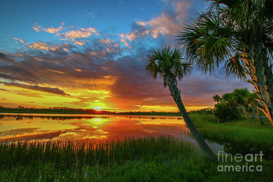 Palm Tree Sunset by Tom Claud