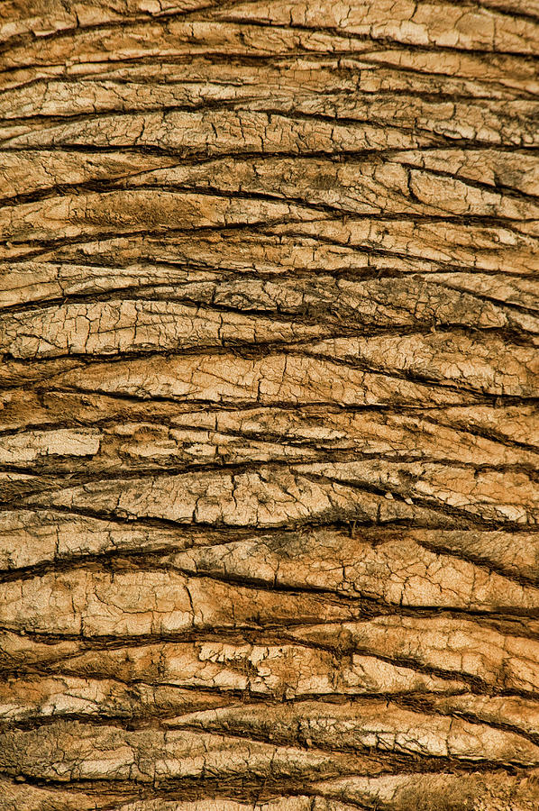 Palm Tree Trunk Close-up Photograph by Brian Stablyk