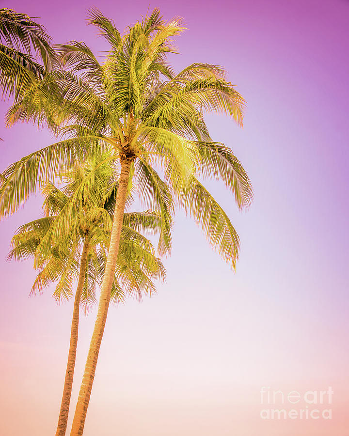 Palm Trees Photograph - Palm Trees And Pink Sky by Delphimages Photo Creations
