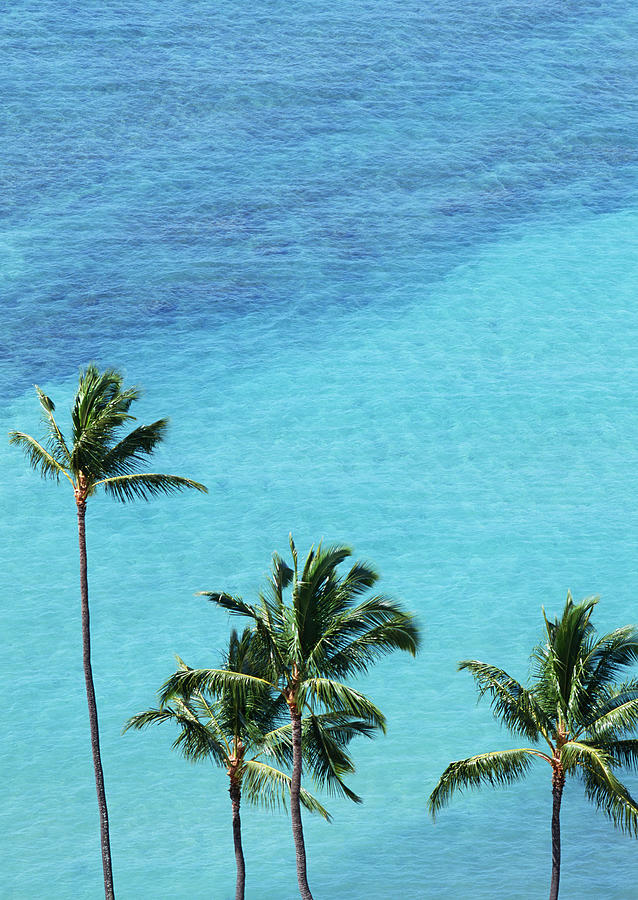 Palm Trees And Surface Of The Sea Photograph by Imagenavi