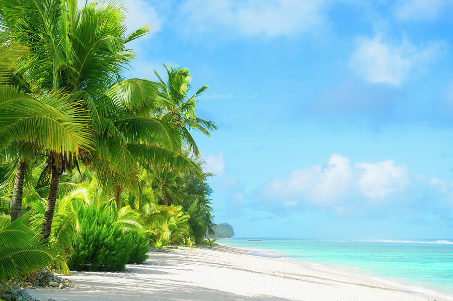 Palm Trees Growing On Tropical Beach Photograph by Jacobs Stock Photography Ltd