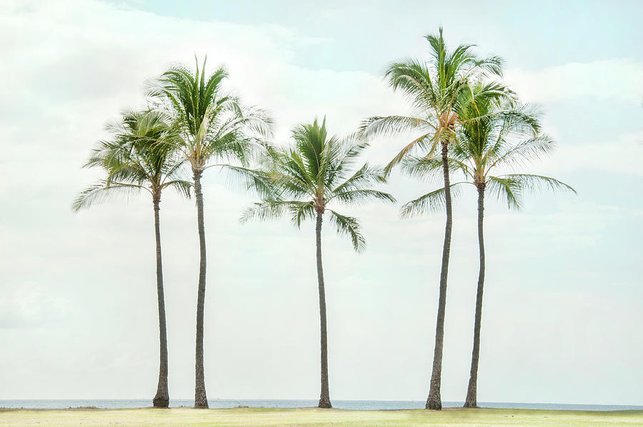 Palm Trees On the Beach by Ramona Murdock