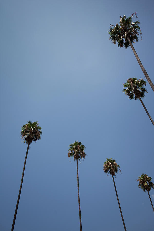 Palm Trees Photograph by Tuan Tran