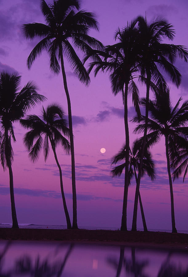 Palm Trees With Moon In A Bright Pink Photograph by Design Pics/ron Dahlquist