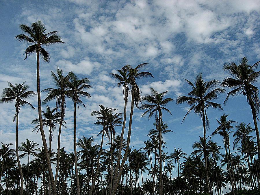 Palms Against Blue Sky Photograph by Rupankar Mahanta Photography (www.rupankar.in)