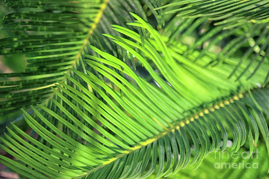Palm Fronds Photograph - Palms In Light And Shadow by Karen Adams