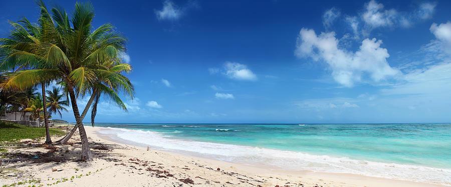 Palms On Caribbean Beach Photograph by Narvikk