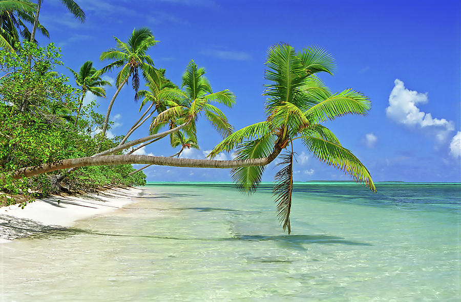 Palmtrees Over Azure Waters In Tonga Photograph by Limewave - Inspiration To Exploration