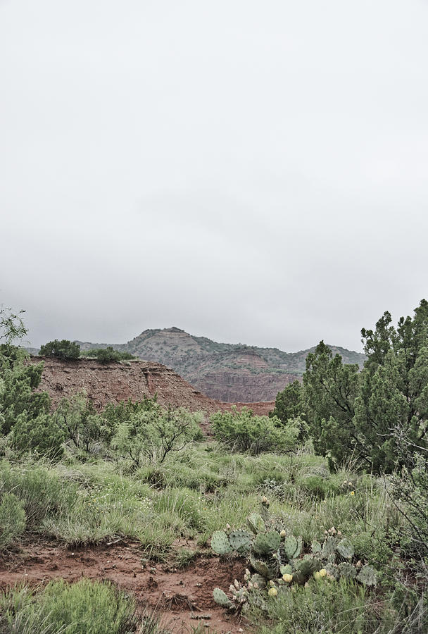Palo Duro Canyon State Park 2 by Andrea Anderegg