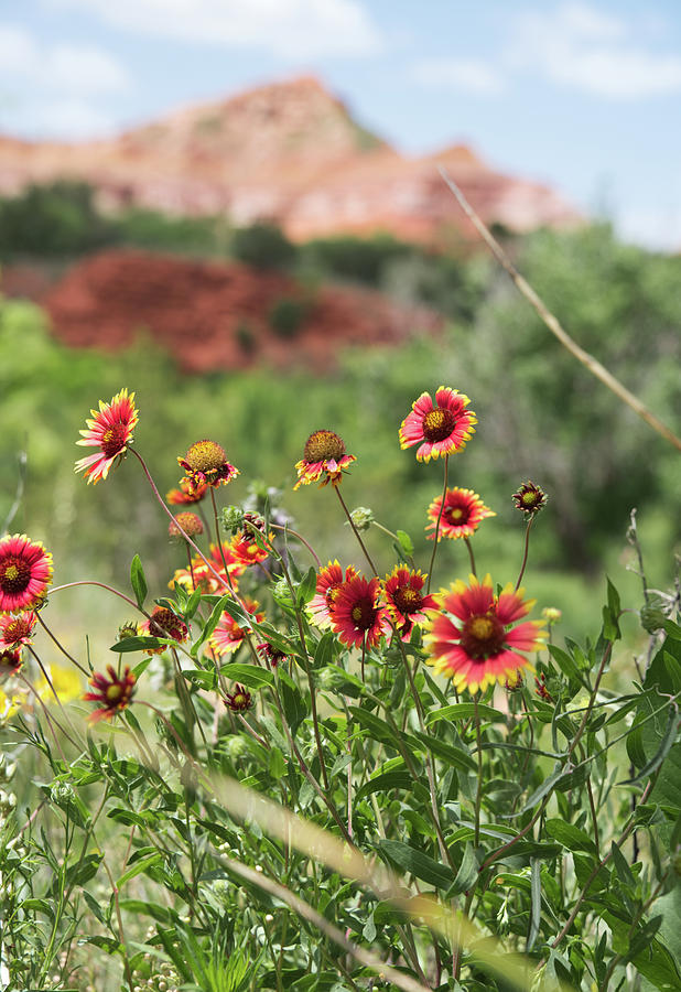Palo Duro Canyon State Park by Andrea Anderegg
