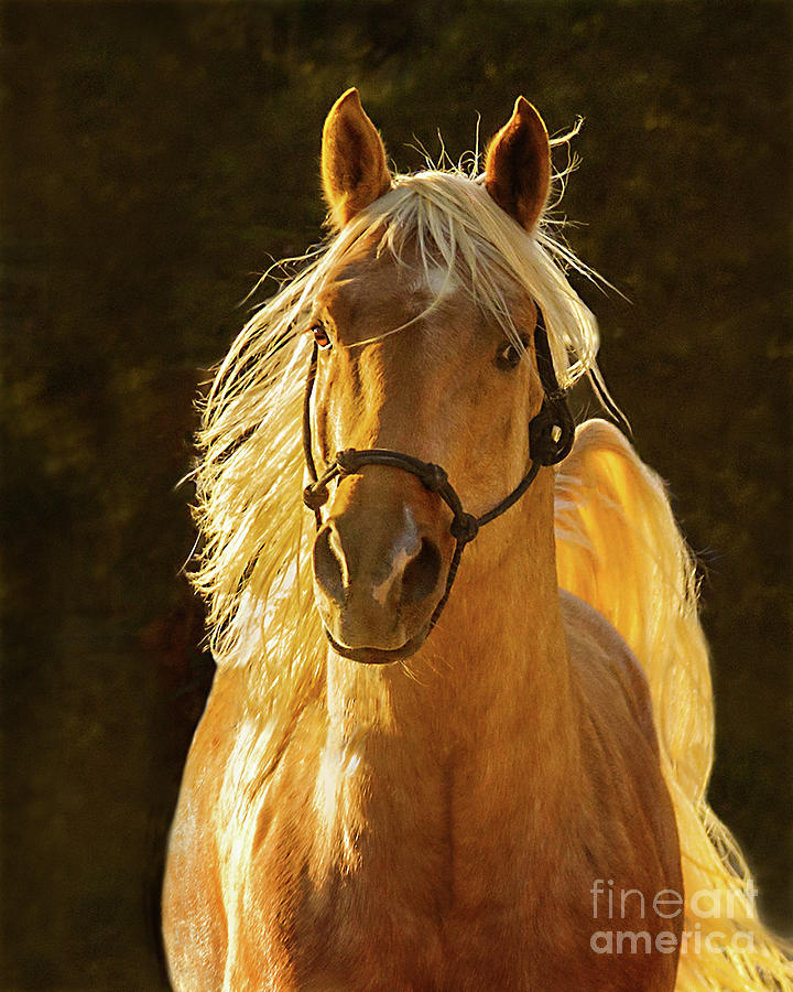 Palomino Gold by Jerry Cowart