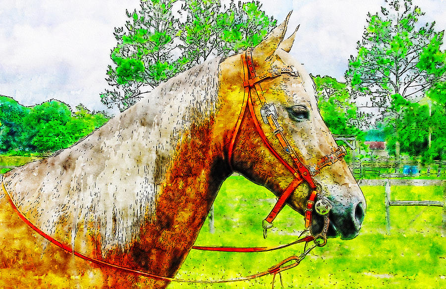 Palomino horse watercolor drawing by Hasan Ahmed