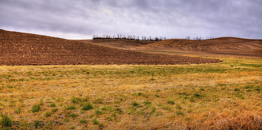 Palouse Farmland by David Patterson
