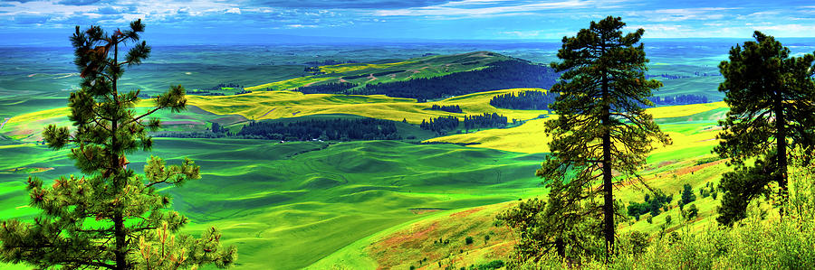 Palouse Hills Canola and Wheat by David Patterson