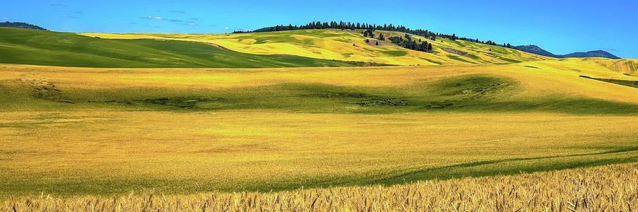 Palouse Panorama 1 by David Patterson
