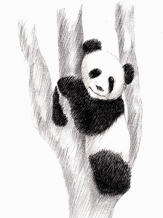 Животные рисунки карандашом легко панда