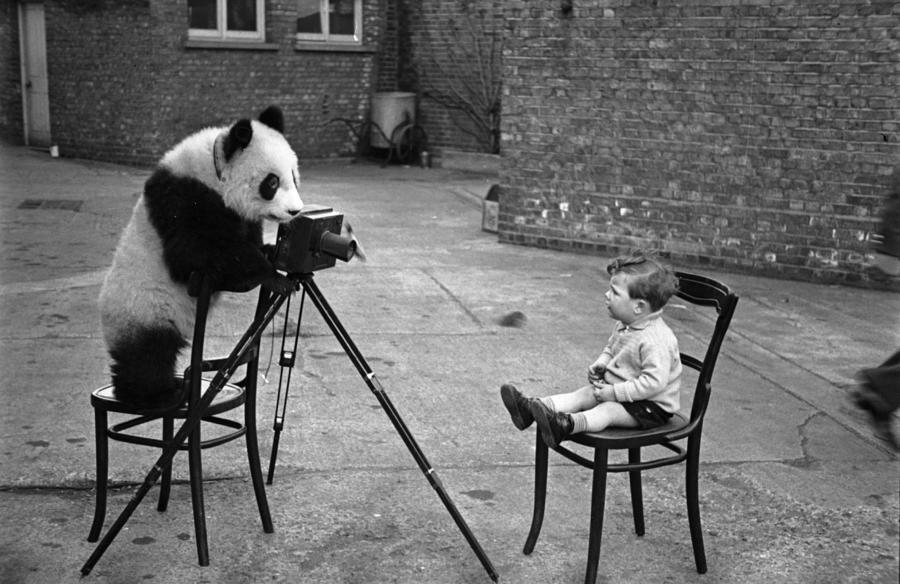 Panda Photo Photograph by Bert Hardy