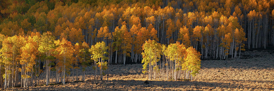 Pando Forest by Dustin LeFevre