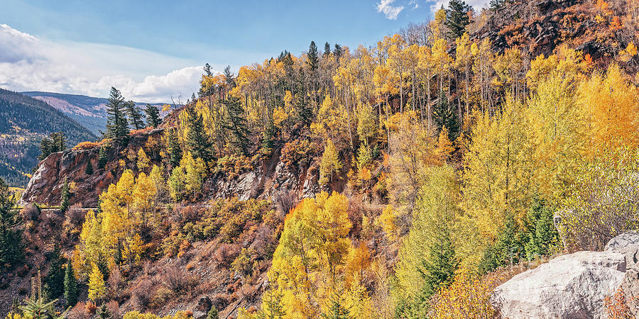 Panorama of A Mountainside Covered with Changing Aspens - Roaring Fork River Pitkin County Colorado by Silvio Ligutti