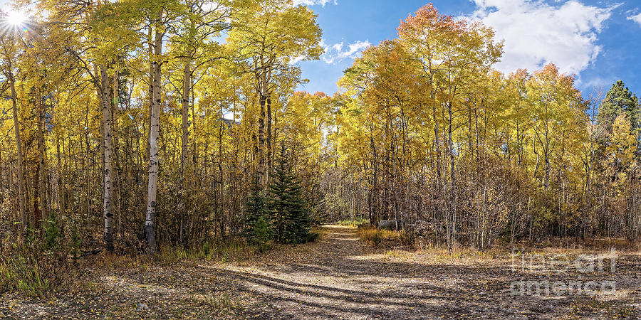 Panorama of Yellow Aspen Forest on the Way to Independence Pass - Twin Lakes Colorado Rocky Mountain by Silvio Ligutti