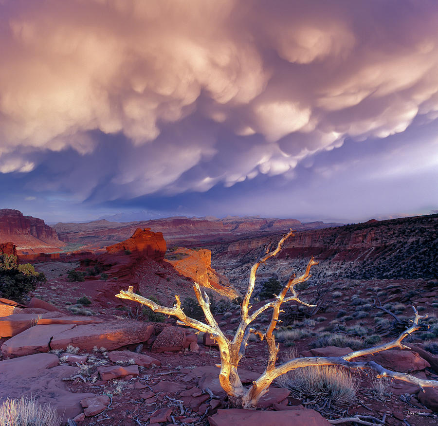 Capitol Reef National Park Photograph - Panorama Point by Leland D Howard