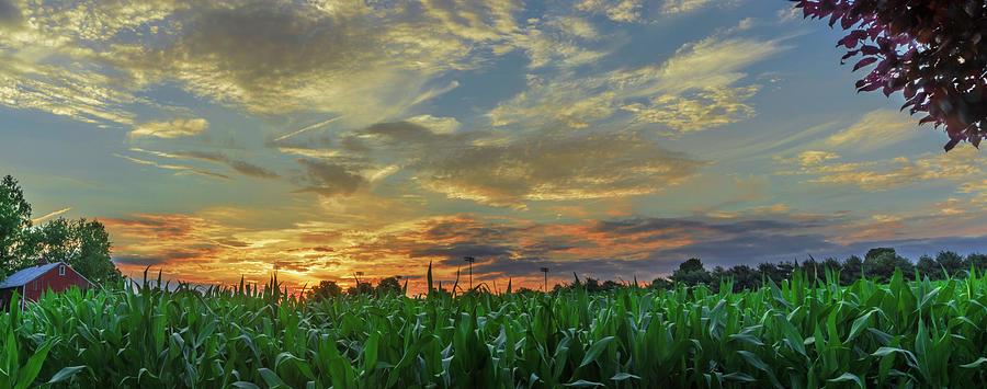 Panoramic Cornfield Sunset by Jason Fink