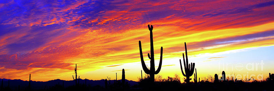 PANORAMIC DESERT SUNSET by Douglas Taylor