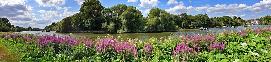 Panoramic Thames River by Andrea Whitaker