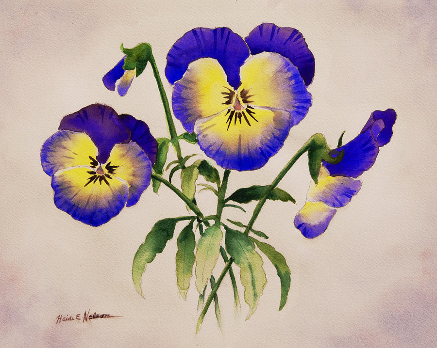 Pansies by Heidi E Nelson
