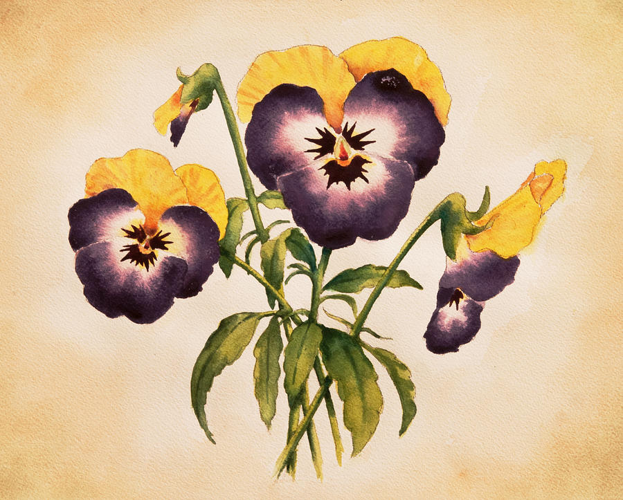 Pansies II by Heidi E Nelson