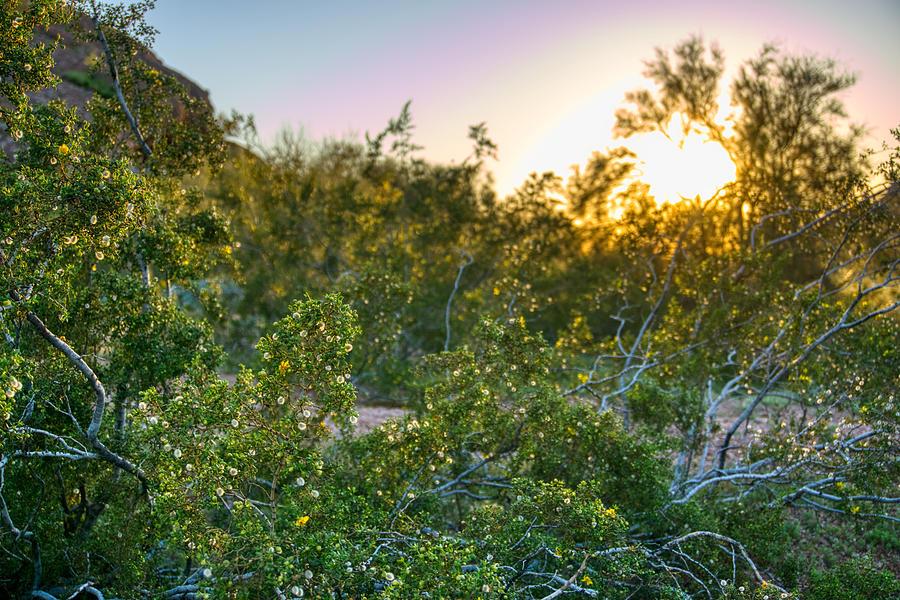 Papago Park Sunset by Anthony Giammarino