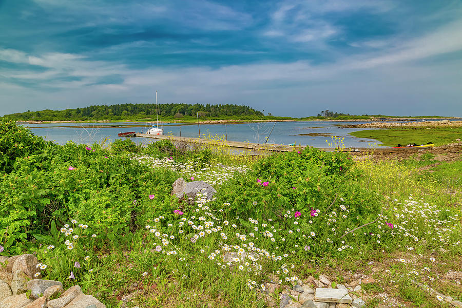 Goat Photograph - Paradise In Maine by Betsy Knapp